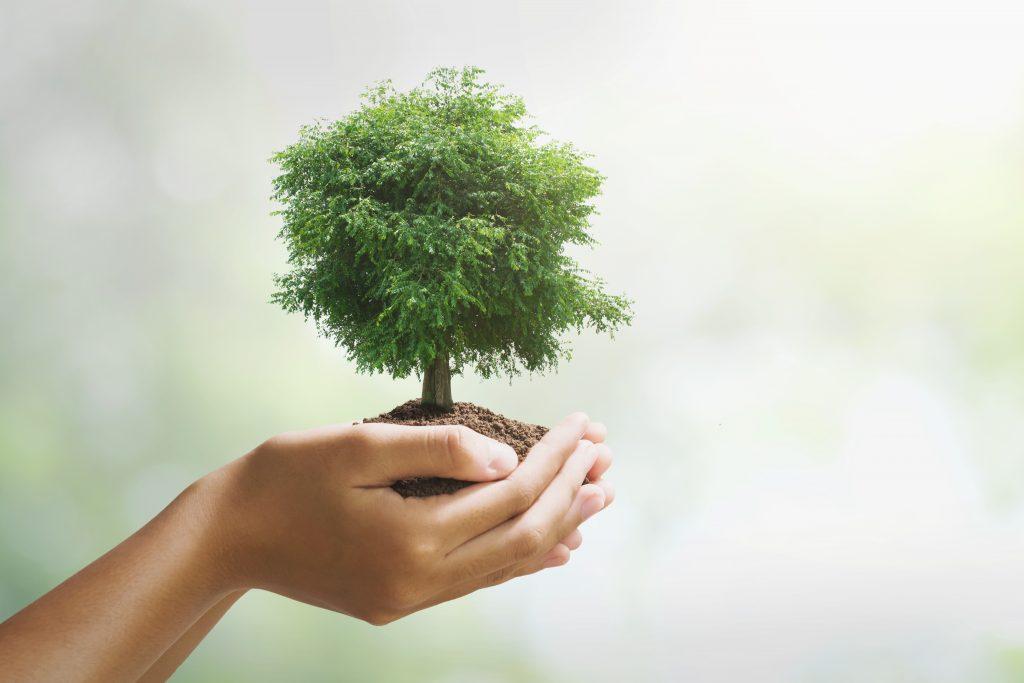 hand holding big tree growing